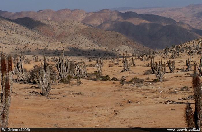 Decoracion Zona Norte De Chile ~   de Az?car  desierto de Atacama; Norte de Chile (Foto W Griem 2005